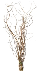 Curly Willow Branches, Tall case of five (shipping included!)