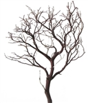 Natural Red Manzanita Branches, 18 in. tall, case of twelve pieces - FREE SHIPPING!