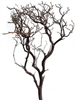 "Natural Red Manzanita, 24"" tall case/12 
