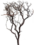 "Natural Red Manzanita, 24"" tall case/12 (shipping included!)"