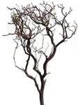 "Natural Red Manzanita Branches, 24"" tall, case of six 