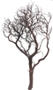 "Natural Red Manzanita, 36"" inches, case of 3 