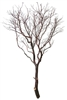 Natural Red Manzanita tree, 84""