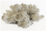 Reindeer Moss, natural color