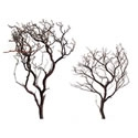 Natural Red Manzanita Sample Pack, 18' and 24""