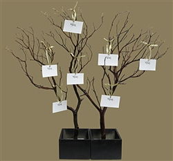Manzanita Wish Tree Kit (shipping included!)