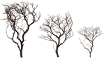 "Natural Manzanita Sample Pack, 12"", 18"", 24"" ( SHIPPING INCLUDED!)"