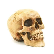 Grinning Skull Decor -Alabastrite