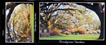 Brookgreen Postcard Book