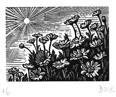 The Engraver's Cut (Diana Bloomfield): Daisies