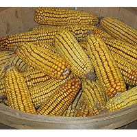 Corn Cobs - Squirrel & Deer Feed