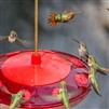 Hummingbird Feeder - Droll Yankee Happy Eight