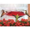 Hummingbird Feeder - Droll Yankee Window Feeder