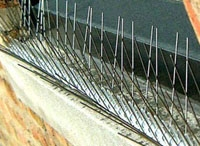 Outdoor Pest & Animal Control - Bird Deterrent Spikes