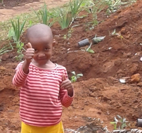 REFORESTATION EFFORTS WITH FORESTPLANET