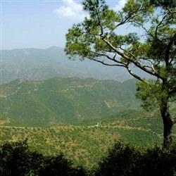 Limassol Shore Trips - The Troodos Mountains