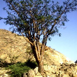 Salalah Shore Excursions - Panoramic Salalah