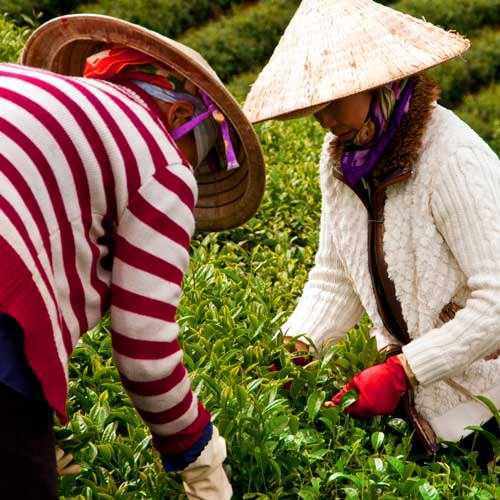 Chan May Shore Excursions - Hoi An and Tra Que Village
