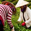 Da Nang Cruise Tours - Hoi An and Tra Que Village