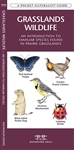 Grasslands Wildlife pocket guide. The ubiquitous ground squirrel is one of thousands of species of animals inhabiting the diverse ecosystems found throughout the grasslands region. This beautifully illustrated guide highlights over 140 familiar and unique