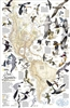 Western Hemisphere Bird Migration Wall Map - National Geographic. This National Geographic map shows the mystery of bird migration in the western hemisphere and the incredible journeys that birds undertake every year. There are some 67 types of birds that