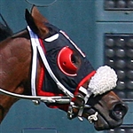 Satin Nylon Blinkers - Horse Racing Equipment