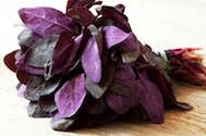Greens - Purple Orach | The Good Seed Company