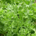 Greens - Cress - Wrinkled Crinkled Crumpled Cress | The Good Seed Company