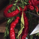 Hot Pepper - Cayenne | The Good Seed Company