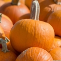 Winter Squash - Pumpkin - Small Sugar | The Good Seed Company