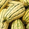 Winter Squash - Delicata | The Good Seed Company