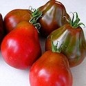 Tomato - Siberian Black Pear | The Good Seed Company