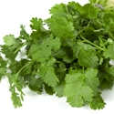 Herb - Cilantro (Coriander) | The Good Seed Company