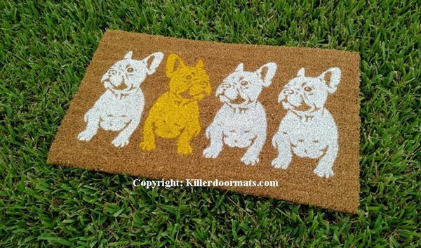 Frenchies Row Of French Bulldogs