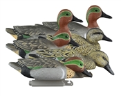 Standard Green Wing Teal