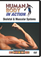 Human Body in Action: Skeletal & Muscular Systems