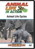 Animal Life in Action: Animal Life Cycles