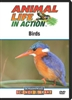 Animal Life in Action: Birds