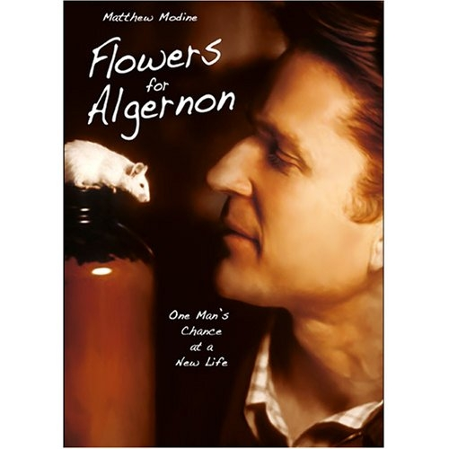Discontinued Flowers for Algernon (CE5908)
