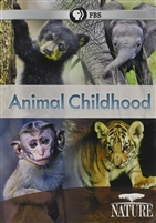 NATURE: Animal Childhood DVD