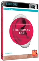 The Senses: Human Ear, The