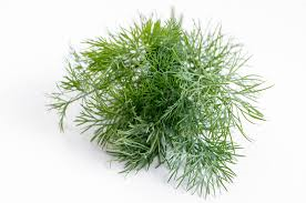 Dill - Wild Fernleaf Infused Olive Oil