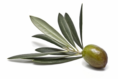 Koroneiki EVOO - Medium Intensity - Australia