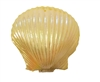 Hinged Plastic Seashell Clam Shell