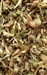 CATNIP RAW HERB 4 oz.