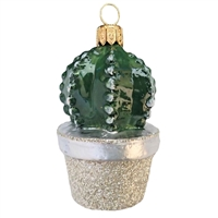 Small Cactus In Pot