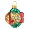 Mini Tropical Rainbow Fish