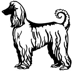 Afghan Hound memorial graphic