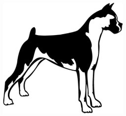 Boxer Dog Graphic