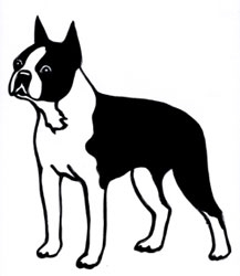 Boston Terrier Graphic